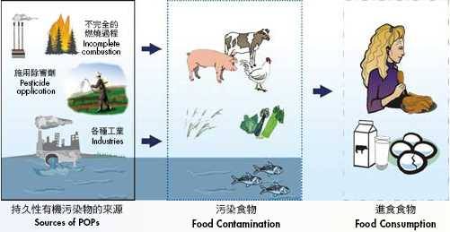 Environment Food And Eating