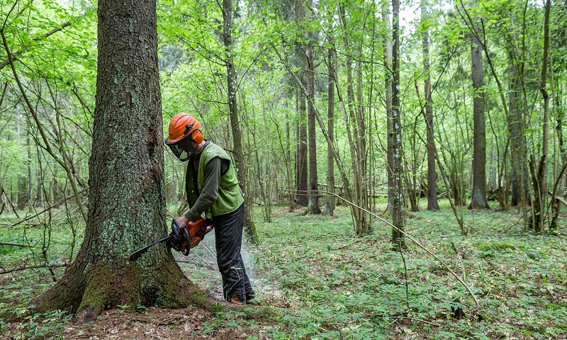 EU calls for immediate ban on logging in Poland's Białowieża forest