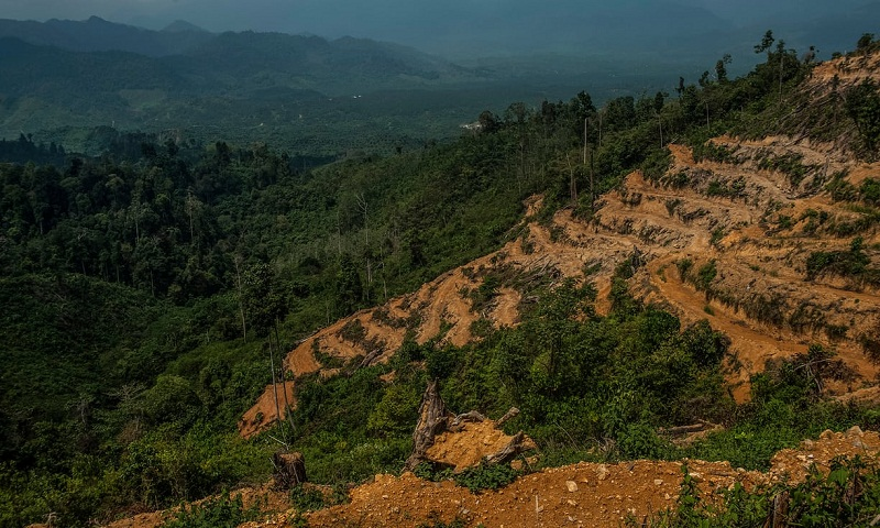 Pepsico, Unilever and Nestlé accused of complicity in illegal rain forest destruction