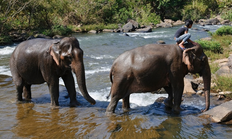 Dozens of Laotian elephants 'illegally sold to Chinese zoos'