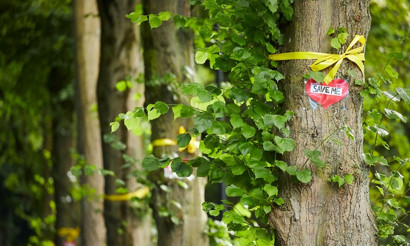 Sheffield tree-felling opponents vow to fight on after court setback