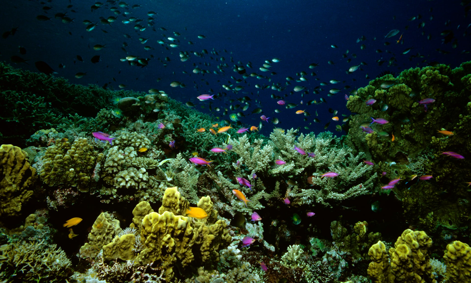 Great Barrier Reef coral-breeding program offers 'glimmer of hope'