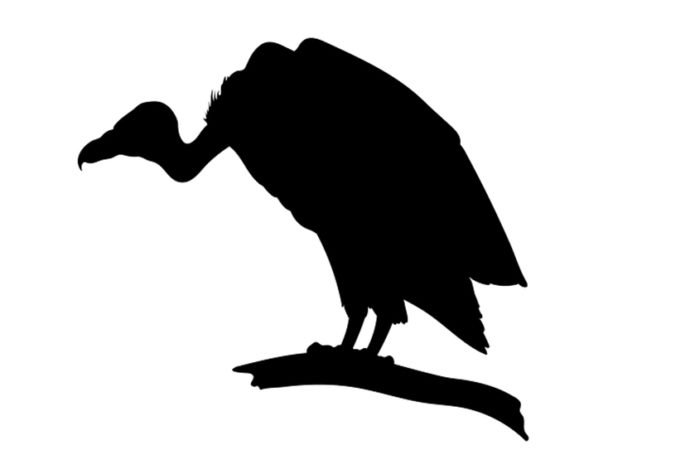 Only 260 vultures left in Bangladesh