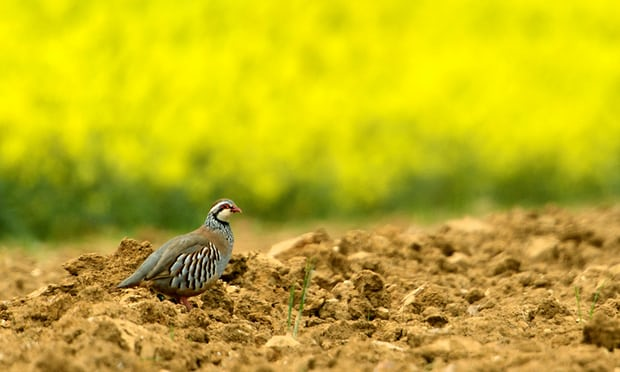 Europe faces 'biodiversity oblivion' after collapse in French birds, experts warn