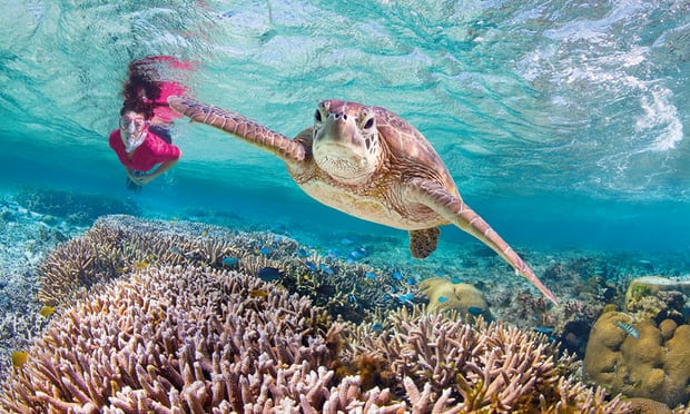 Budget earmarks $500m to mitigate Great Barrier Reef climate change