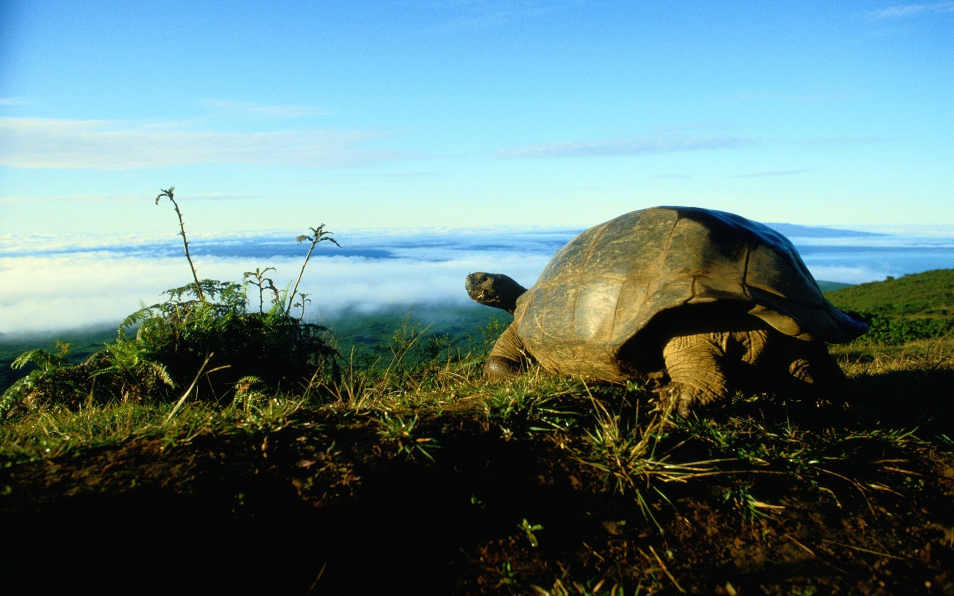 Thieves snatch more than 100 baby giant tortoises from Galapagos Islands