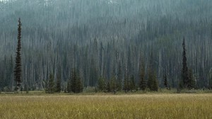 Study: Replanting Trees After Wildfires May Not Be Necessary
