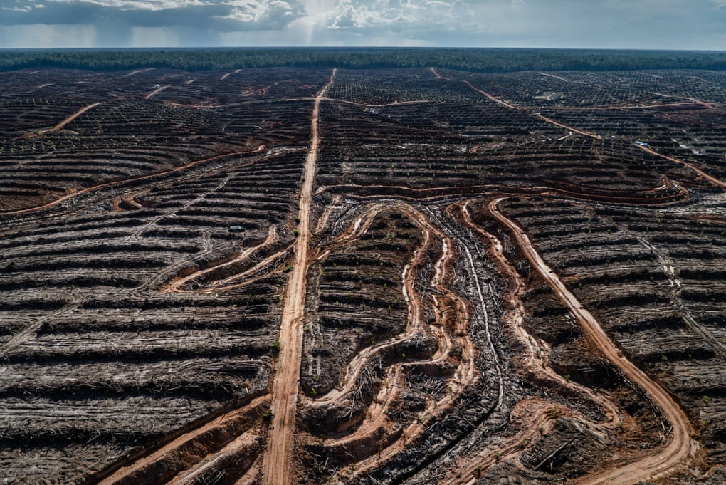 Stop biodiversity loss or we could face our own extinction, warns UN