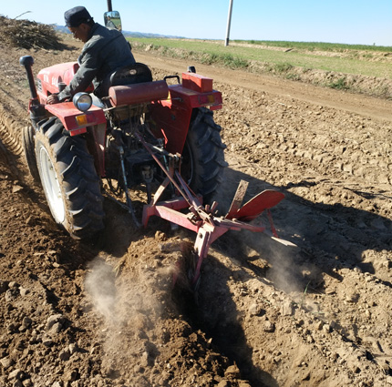 Plow tillage in one of the experiment plots, Dryland Agricultural Research Station, China