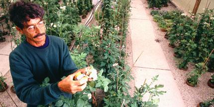 Plant genetic resources ensure ag's future