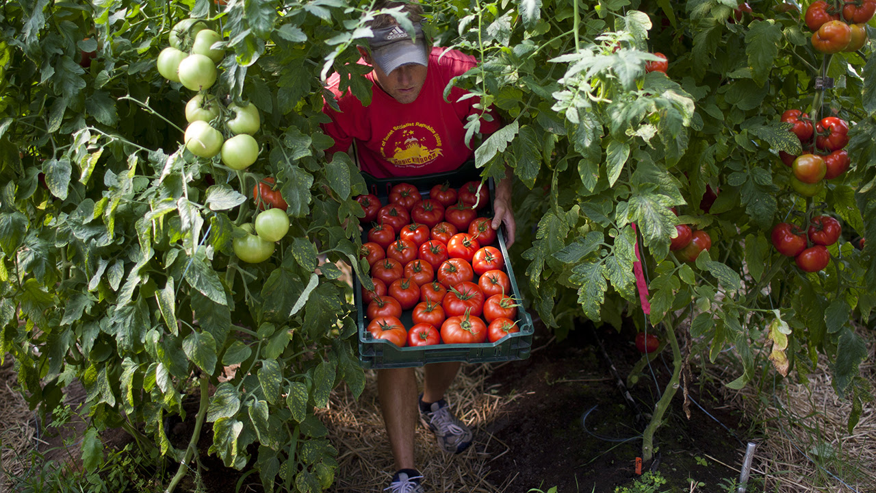 Organic farming is on the rise in the U.S.