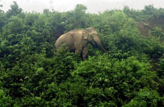 Elephants face 'time bomb' in Bangladesh