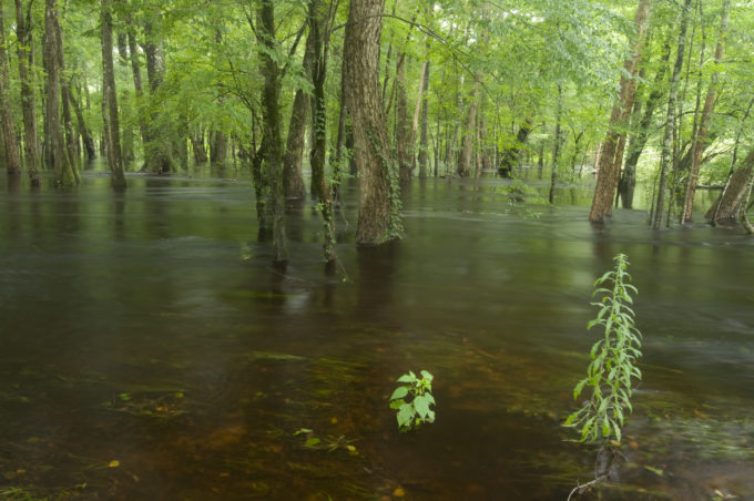 HOW THE CLEAN WATER ACT COULD BECOME A DIRTY WATER RULE
