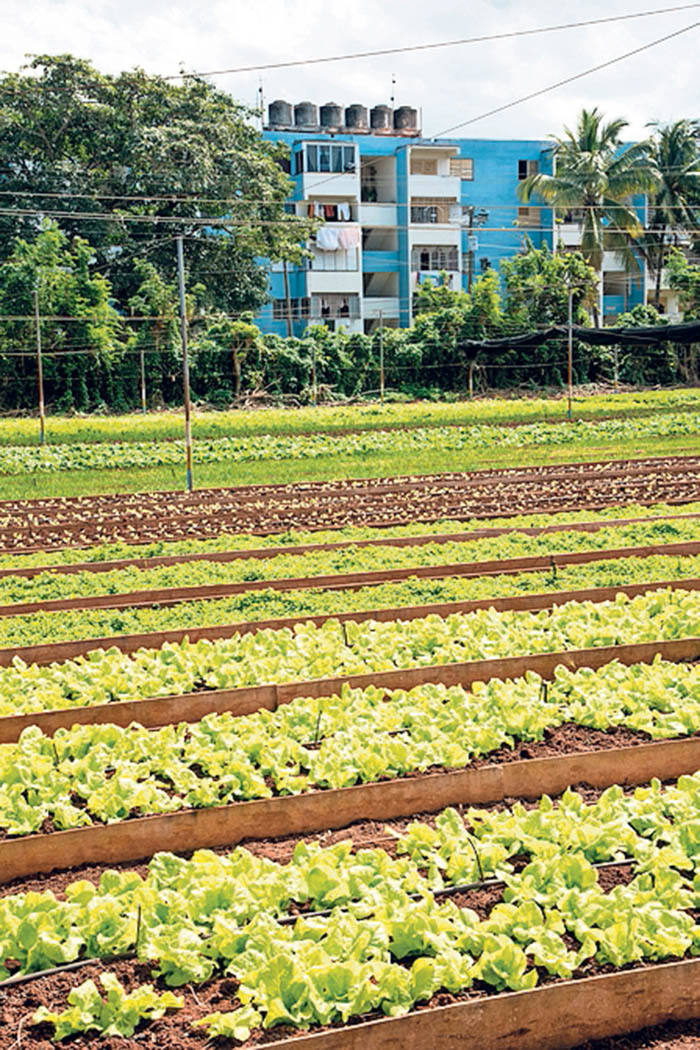 Organic farming's growth only part of answer to food sustainability
