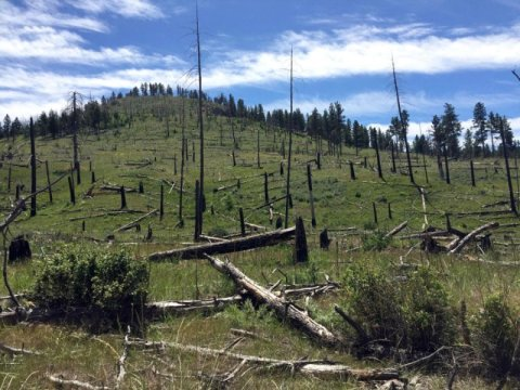 Climate change limits forest recovery after wildfires