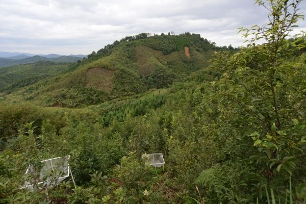 Plant Diversity Increases Insect Diversity