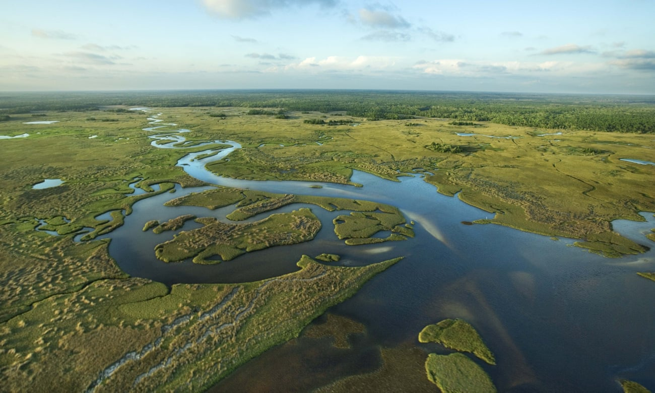Everglades in crisis: can this Florida treasure avert an environmental tragedy?