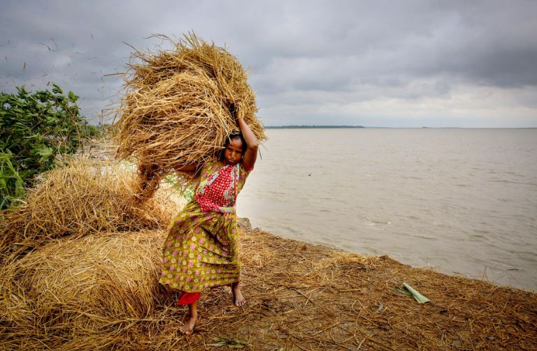 A woman in Bangladesh uses bales of straw to try to protect a riverbank that is eroding away from floodwaters