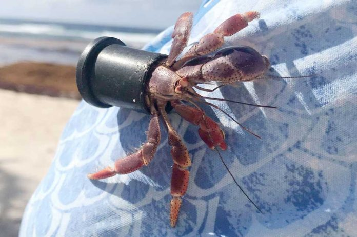 plastic-crab-1-696x462