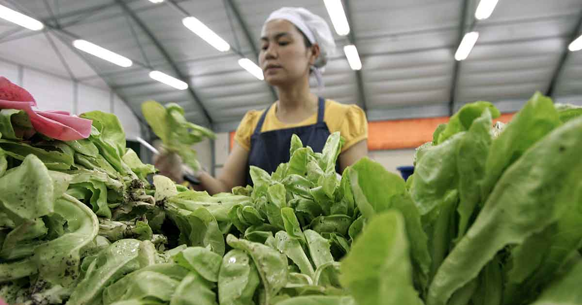Organic farming in Southeast Asia