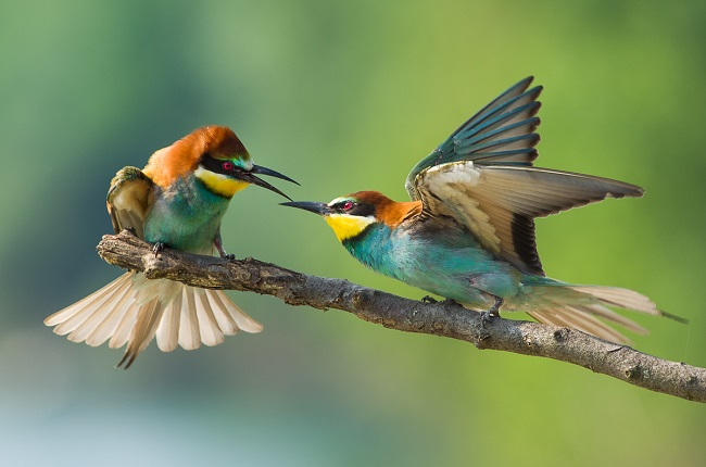 Greenpage_bird-2