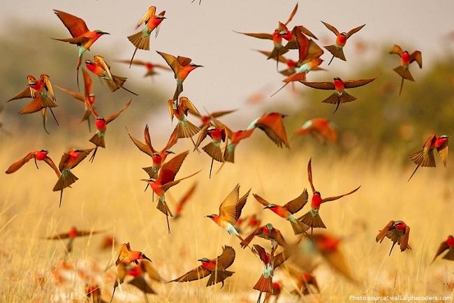 Greenpage_bird-3