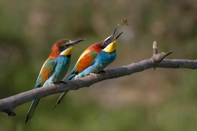 Greenpage_bird-4