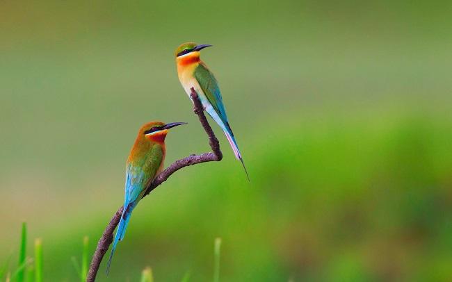 Greenpage_bird-5