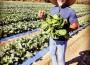 Lifetime-Farms-Alabama