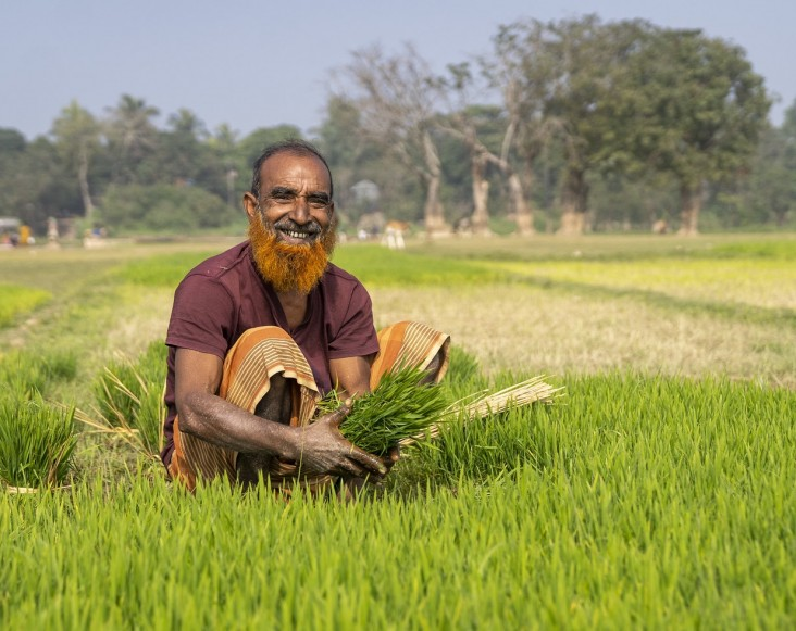 Bangladesh_-_Rice_Farmer