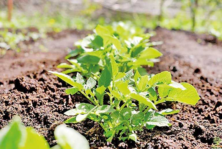 PPP to boost organic agriculture in Mahaweli