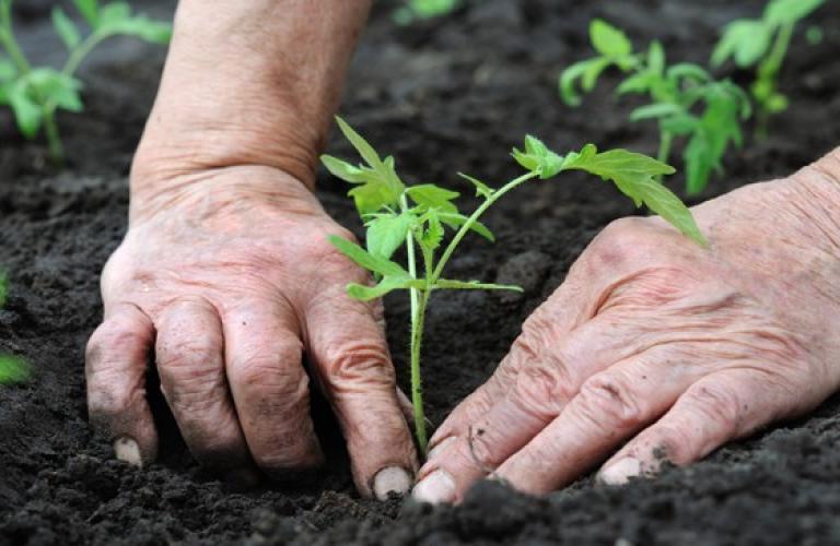 Pic-1-Organic-Farming