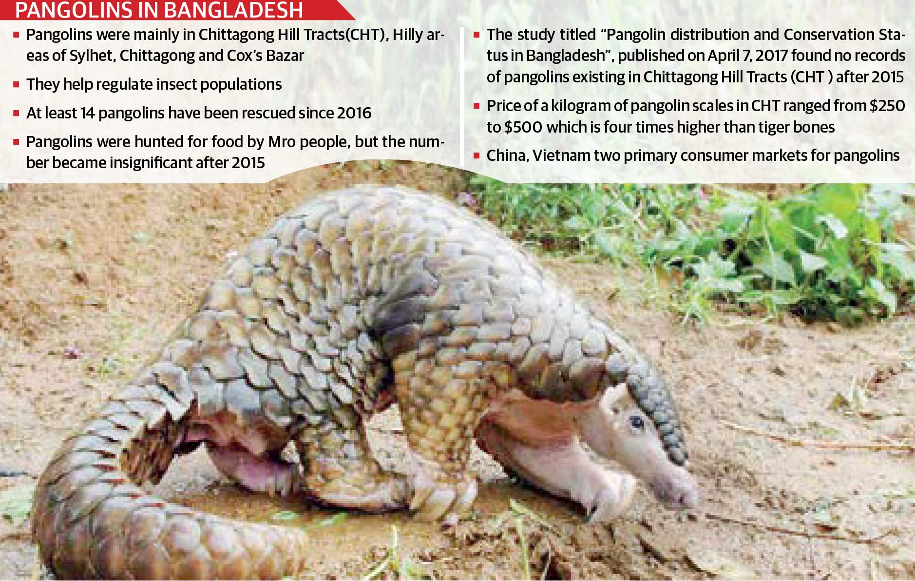 Will pangolins survive in Bangladesh?