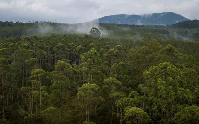 world-forest-020920-01