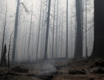 The remains of a fire damaged trees stand as smoke billows in the aftermath of the Beachie Creek fire near Detroit, Oregon