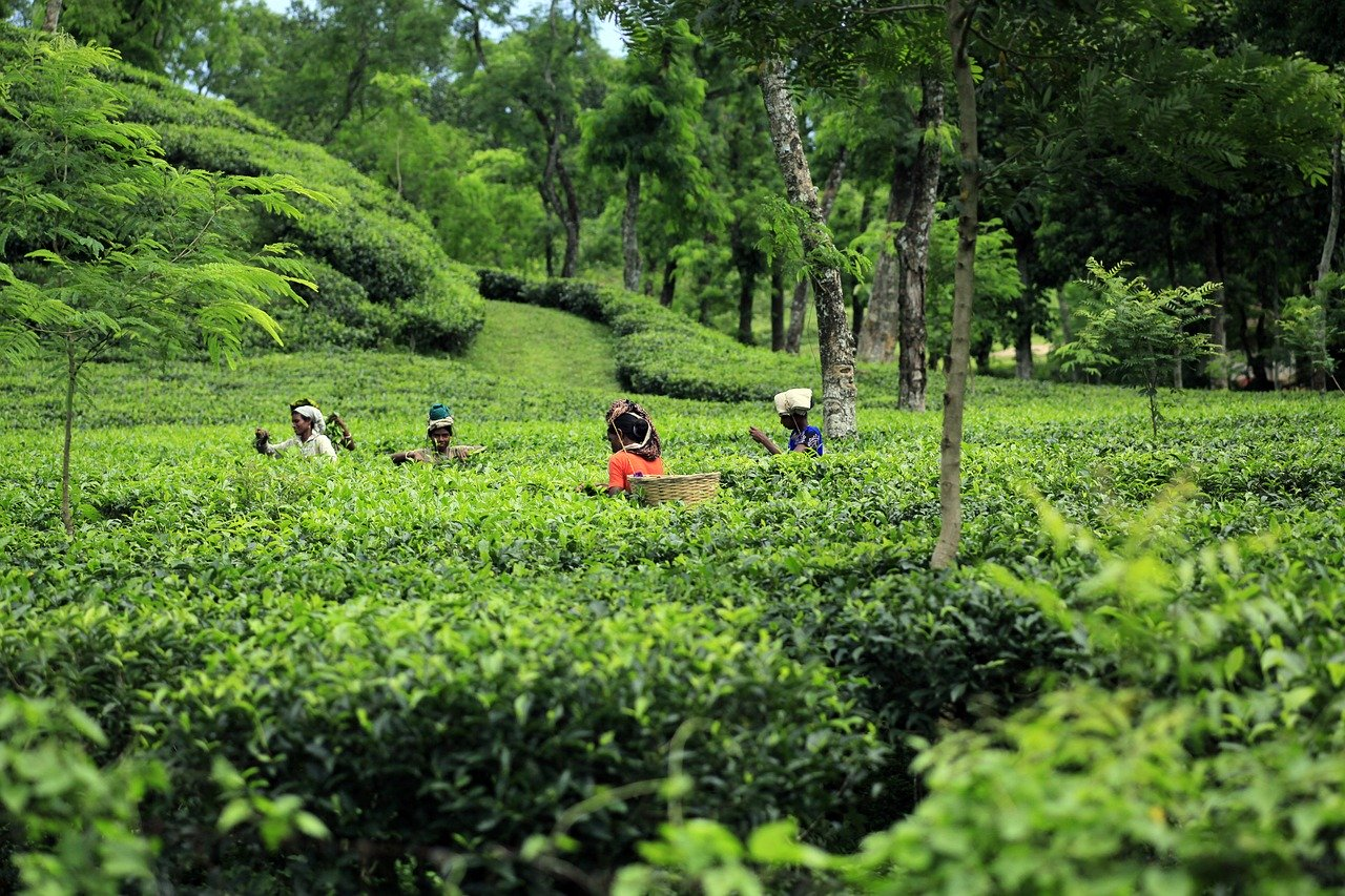 OP-ED: Eco-tourism: An opportunity for Bangladesh