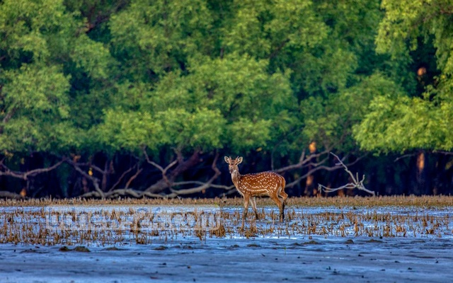 Where did all the deer in Katka wildlife sanctuary go?