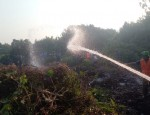sundarbon-fire-pic-2-1612796389988