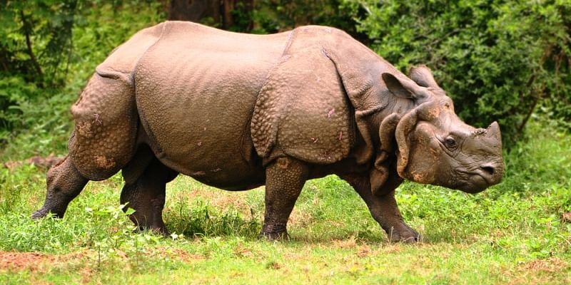 assam-wildlife