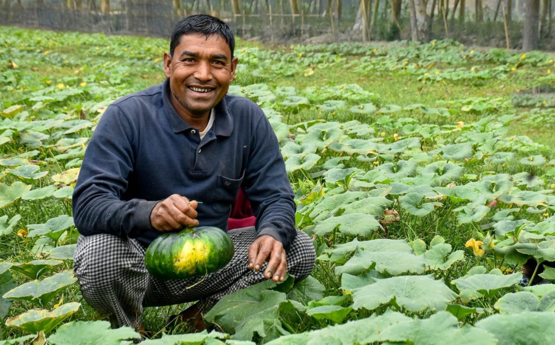 organic_vegetable_farming_gaibandha