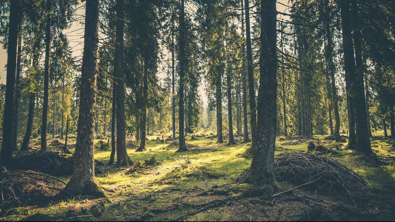 World Forestry Day: Emphasizing the need to conserve, protect and expand forests