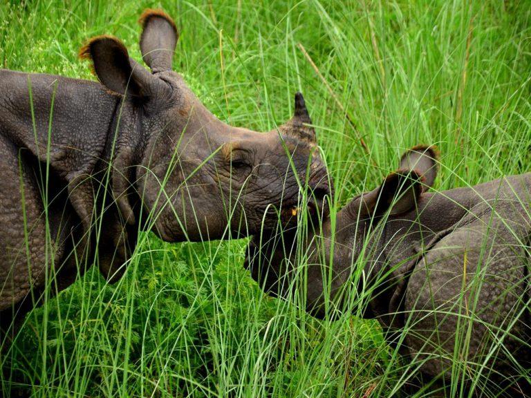 Photo-Credit-WWF-Nepal-2-768x576