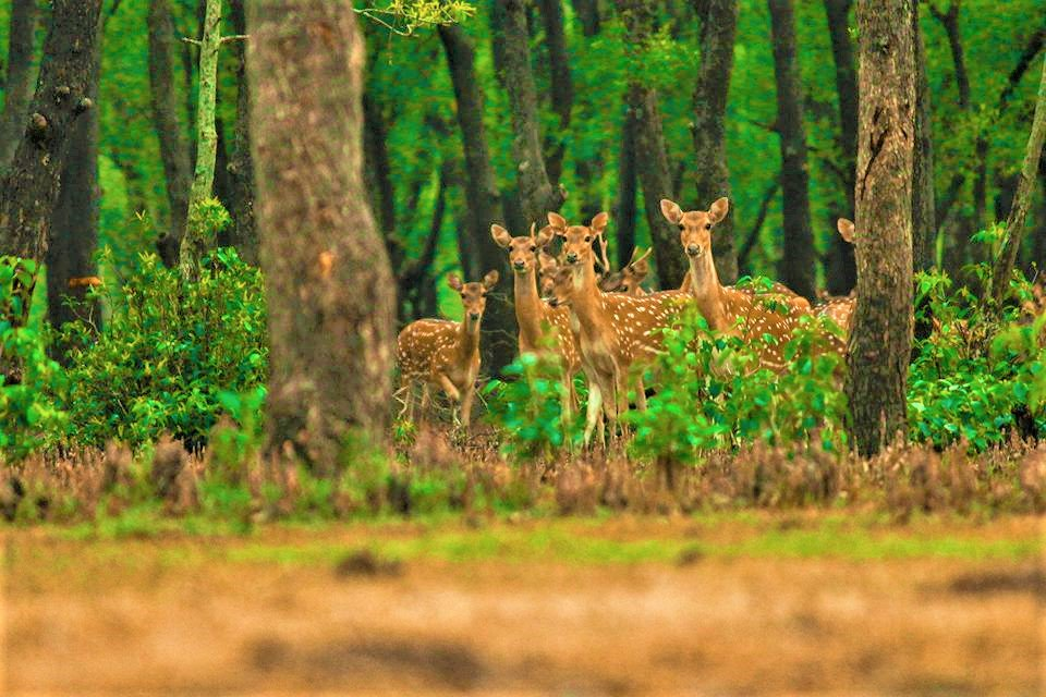 The Nijhum Dwip – the Second Largest Mangrove Forest in Bangladesh