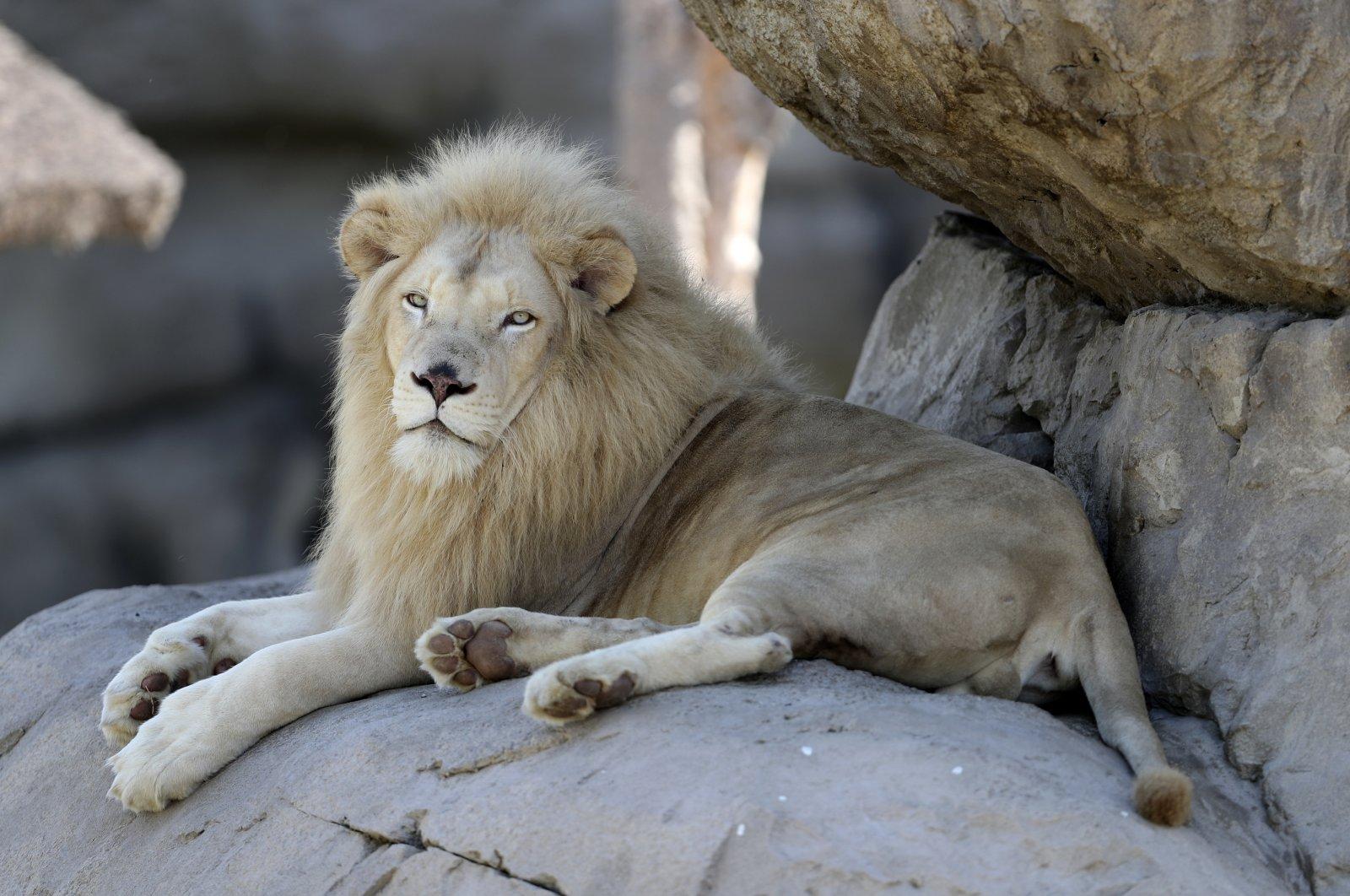 UAE's Dubai cracks down on owners of illegal exotic wildlife