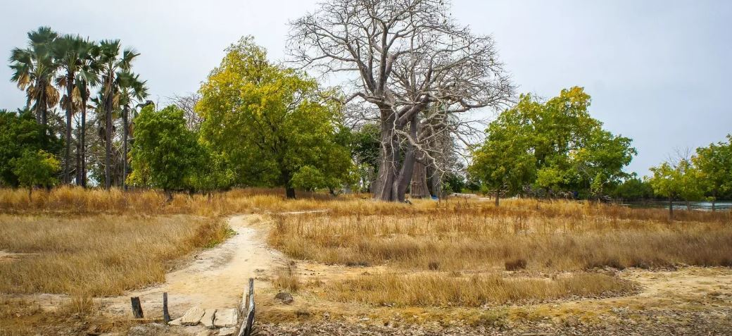 How to grow Africa's next natural wonder