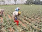 rajshahi-agriculture-news-21-05-2-1621705507699