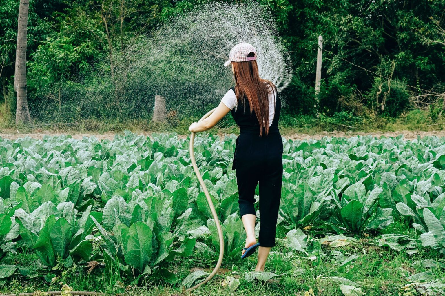 What role should organics play in sustainable food systems?