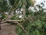 trees-uprooted-following-the-havoc-of-severe-cyclonic-storm-amphan-in-satkhira-district-dhaka-tribune-1593075213303