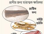 prothomalo-bangla_2020-10_07c8180c-8cd2-4a1e-9151-63238064d5d0_Capture