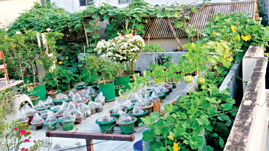Rooftop gardening ideas